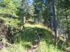 Waldweg am Grat