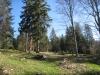 ein Jurawald