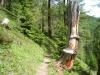 durch den Berggwald