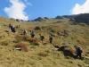 Aufstieg zur Segneshütte