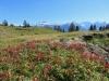 Panorama vom Oberblegisee 1420m: