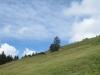 Alp Neuwald 1317m