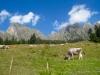 Alp mit: Gamsberg 2384m, Sichli 2320m, Isisixer Rosswis 2334 m, Fulfirst  Chöpf 2321m,