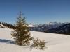 Weihnachtstanne; Panüelerchopf 2859m, hi Schesaplana 2964m, vo Dreieck: Gir 2164m
