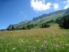 Blumenwiesen unterhalb der Bergkette zum Churer Joch