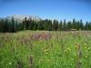 prächtige Blumenwiesen; Stätzerhorn 2574m, Fulenberg 2572m