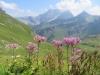 Grauer Alpendost mit; Oberzalimkopf 2340m, Panüeler Kopf 2856m, Salaruelkopf 2841m, Schafberg 2727m, Hornspitz 2537m