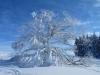 Winterwunder beim Regelstein