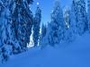 im Winterwunder Cholwald