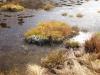gefrorener Tümpel auf der Moosfluh