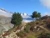 die beiden fotogenen Arven; Zenbächenhorn 3386m, Rothorn 3271m; Wannenhörner
