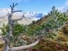 Frost an den Arvennadeln; enbächenhorn 3386m, Rothorn 3271m, Olmenhorn 3314m, Gross Grünhorn  4043m, Fiescherhörner, Gross Wannenhorn 3905m, Klein Wannenhorn 3706m, Strahlhorn 3026m