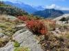 Alpbubel, Mischabelgruppe, Matterhorn und Weisshorn, Bishorn