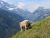 prächigte Aussicht von der Weide ; Clariden, Chammliberg, Glatten