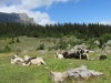 Alp Bergeten