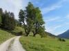 oberhalb der Schwarzwaldalp