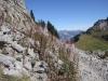 der Weg zum Loucherhorn 2231m; re Rote Flue 2295m