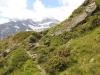 Bergweg mit Böshorn