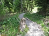ein schöner Wanderweg hinauf zur Salwide