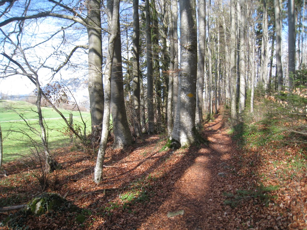 im Wald unterhalb Aeschi