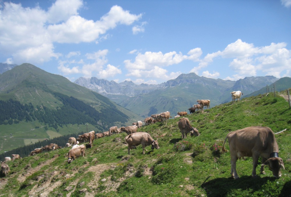 Alp Valpun 1882m; Chüenihorn, Schijenflue 2625m, Stock 2484m
