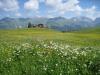 Blumenwiesen auf dem Stelserberg