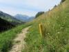 Wiesenpfad; Staldenflue 2250m,