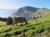 Aufstieg nach Alp Breitenfeld; Wilerhorn
