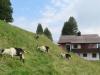 auf Rigi Scheidegg  1645m