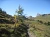Kamm 2122m, Glegghorn 2445m; Maienfelder Alp