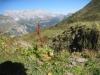 Schafberg 2727m, Panüelerkopf 2859m, Salaruelkopf 2840m, Schesaplana 2965m, Zimba 2643m, Kirchlispitzen 2552m