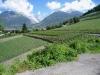 die Rebberge Visperterminen;re hi Gärsthorn 2927m