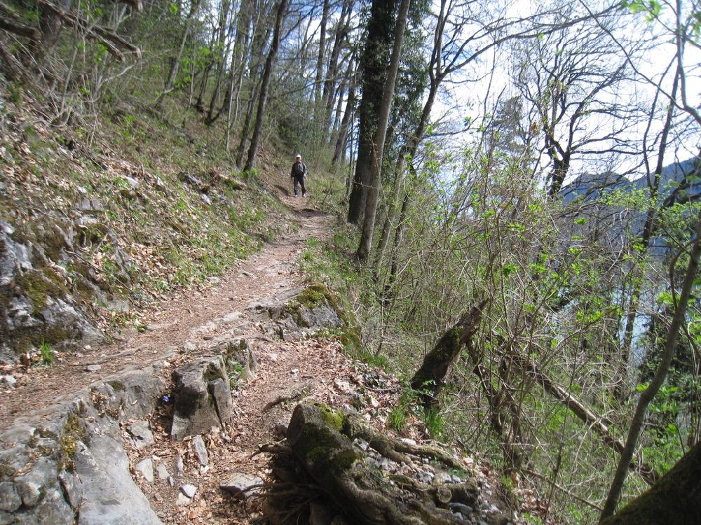 ein schöner Wanderweg durch den Wald
