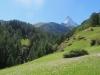 Blick zurück auf das Matterhorn 4478m; Wiesen voller Herbstzeitlosen