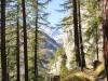 ein schöner Waldweg im Üsser Wald