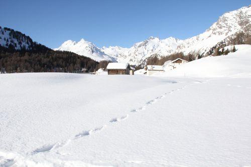 winterbild_2011_02_500