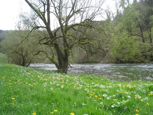 Blumenwiesen am Doubs