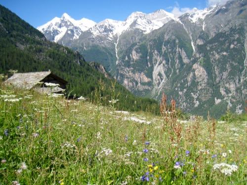 Bergsommer; Weisshorn, davor Brunegghorn, Bishorn vo Schöllihorn 3500m,,Üssers- Barrhorn, Inn. Barrhorn