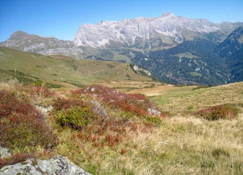 Alp Sadrein mit: Tschingel 2540m, Schafberg 2727m, Salaeuelchopf 2841m,, Scheseplana 2964m, Zimba 2643m